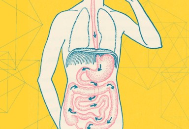 Everything You Need To Know About Gut Health_header